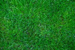 Background for banner with green grass. The texture of the grass. View from above. Spring and summer background for a banner with. Background for banner with royalty free stock photos