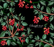 Background with barberry Stock Images