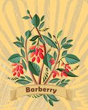 Background with barberry in vintage style Royalty Free Stock Photo