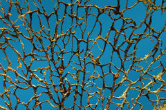 Background with bare branches underwater Stock Photos