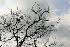 Background of bare tree stock photos