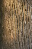 Background bark. Under the evening sun with reflections Stock Photo