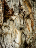 Background of bark. Background made of dry bark Royalty Free Stock Image