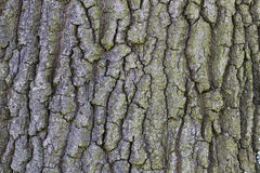 Background bark. Background texture of a bark royalty free stock image