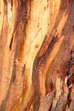 Background - bark Stock Photography