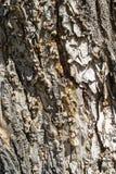 Background bark Royalty Free Stock Image