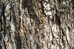Background bark Royalty Free Stock Photography