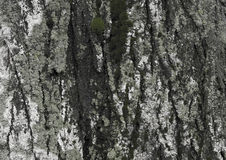 Background. bark. moss Stock Images