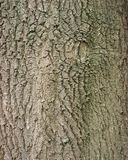 Background of bark on old oak tree. Closeup Stock Photo