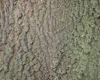 Background of bark on old oak tree. Closeup Stock Photos