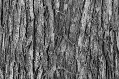 Background the bark of an old tree Royalty Free Stock Image
