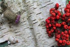 Background bark Royalty Free Stock Photo