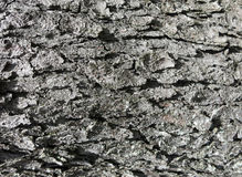 Background 0004 Bark Surface Texture Stock Photography