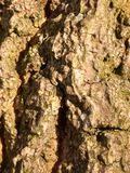Background bark texture close up detail rough and grunge royalty free stock photos