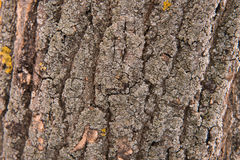Background bark texture natural Stock Images