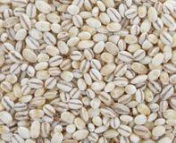 Background of barley grain Royalty Free Stock Photos