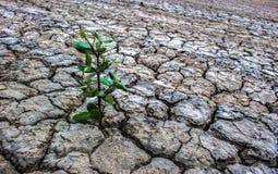 Background barren ground trees regenerate. Royalty Free Stock Photos