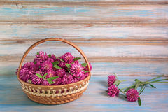 Background with basket full of inflorescences of red clover. royalty free stock image