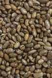 background bean seeds Stock Image