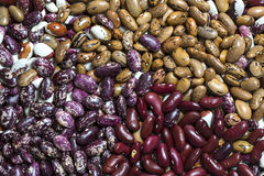 Background bean seeds Stock Images