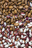 Background bean seeds Royalty Free Stock Photo