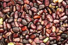 Background from bean vegetables Stock Images