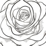 Background with beautiful black and white rose Stock Image