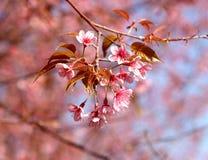 Background, Beautiful, Bloom stock image