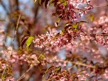 Background, Beautiful, Bloom stock photos