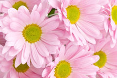 Background of pink flowers Stock Photo