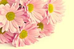 Beautiful bright pink flowers Royalty Free Stock Images