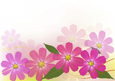 Background with beautiful color flowers. Royalty Free Stock Photography