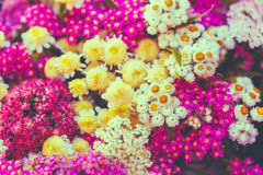 Background Of Beautiful Colorful Wild Summer Flowers. Stock Photo