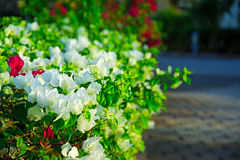 Background of beautiful floral bush. Natural background. Background of beautiful floral bush Royalty Free Stock Photos