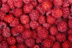 Background of a beautiful fresh raspberry. Healthy food. Vegetar. Ianism Royalty Free Stock Photography