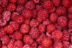Background of a beautiful fresh raspberry. Healthy food. Vegetarianism. Background of a beautiful fresh raspberry. Healthy food. Vegetarianism Royalty Free Stock Photography