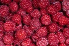 Background of a beautiful fresh raspberry. Healthy food. Vegetarianism. Background of a beautiful fresh raspberry. Healthy food. Vegetarianism Royalty Free Stock Image