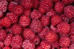 Background of a beautiful fresh raspberry. Healthy food. Vegetarianism. Background of a beautiful fresh raspberry. Healthy food. Vegetarianism Stock Image