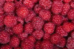 Background of a beautiful fresh raspberry. Healthy food. Vegetar. Ianism Royalty Free Stock Image