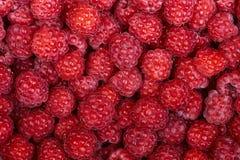 Background of a beautiful fresh raspberry. Healthy food. Vegetar. Ianism Stock Photography