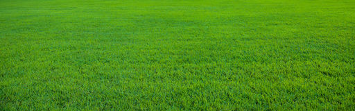 Background of beautiful green grass pattern Stock Images