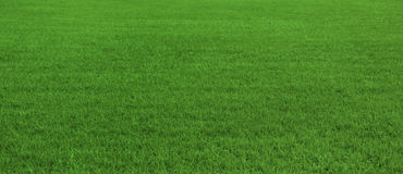 Background of beautiful green grass pattern. Background of beautiful, fresh green grass pattern Stock Photography