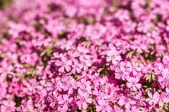 Background beautiful live flowers. A background beautiful live flowers royalty free stock photo