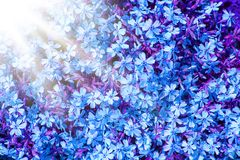 Background beautiful live flowers. A background beautiful live flowers royalty free stock photography