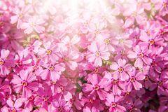Background beautiful live flowers. A background beautiful live flowers stock image