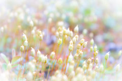 Background with beautiful moss Royalty Free Stock Image