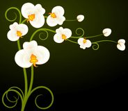Background with beautiful orchids Royalty Free Stock Images