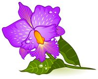 Background with beautiful orchids Royalty Free Stock Photos