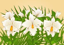 Background with beautiful orchids Stock Photography