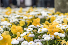 Background with beautiful pattern yellow and white flowers field of flower blurry close up Stock Photo